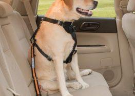 Confira algumas dicas para viajar com animais em segurança