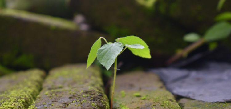 Semana do Meio Ambiente conta com ações de conscientização em Guarapari