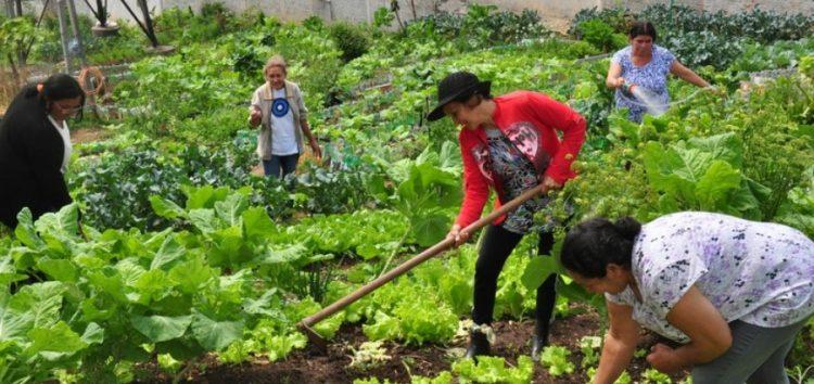 Vereador sugere programas de Horta Comunitária e Compostagem para Anchieta