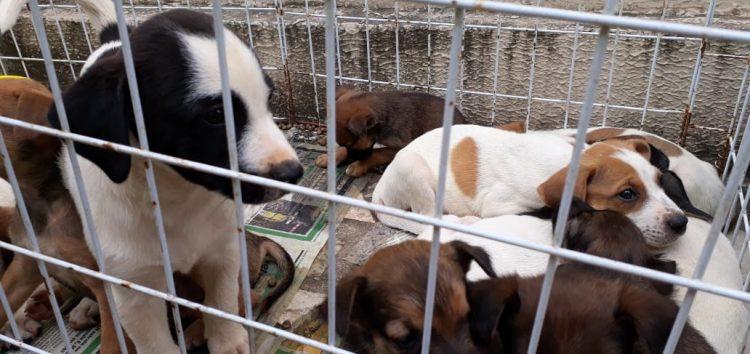 Feira promove adoção de cães e gatos em Guarapari