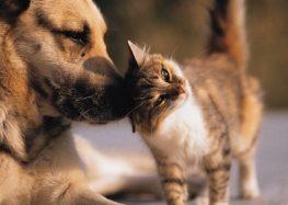 Amanhã (24) é dia de adoção de cães e gatos em Guarapari