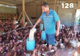 Produção de ovos caipiras é aposta da agroindústria de Guarapari