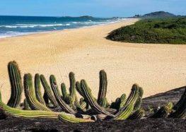 Parque Paulo César Vinha recebe plantio de mudas e limpeza de praias em Guarapari