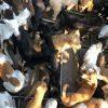Crueldade: Polícia detém família suspeita de vender carne de cães e gatos em Guarapari