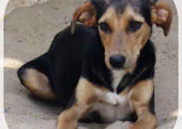 CCZ de Guarapari disponibiliza animais castrados e vacinados para adoção