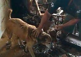 Veterinária de Guarapari arrecada doações para animais de Alfredo Chaves e Iconha