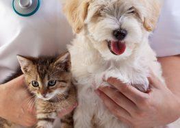 Guarapari inicia agendamento da castração de cães e gatos