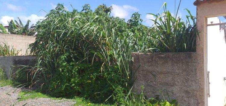 Lote abandonado causa transtorno para moradora da casa vizinha em Guarapari