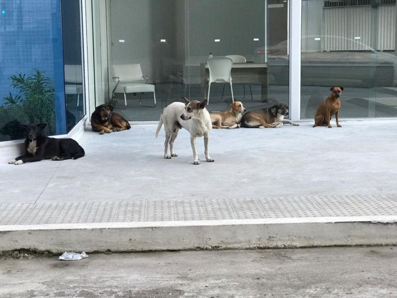 Cães abandonados geram preocupações em Guarapari
