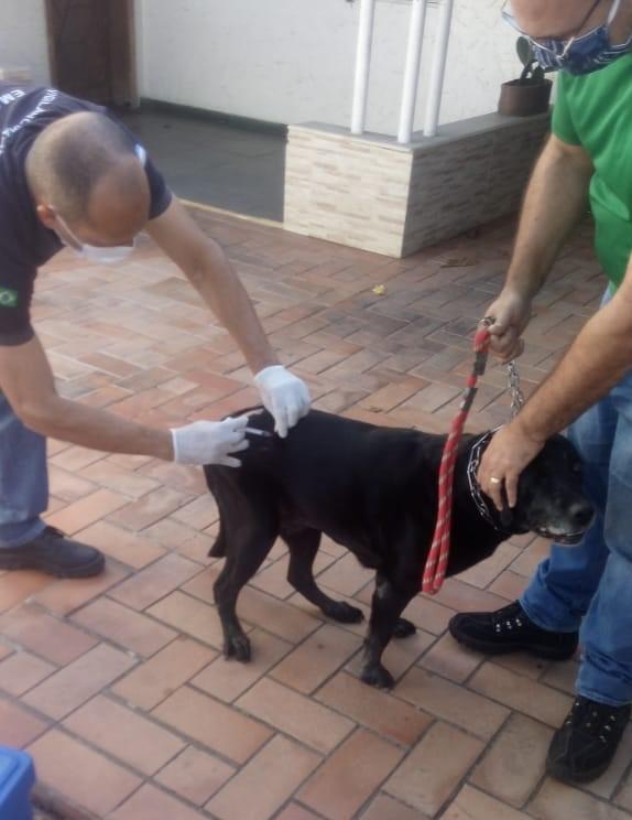 Morcego com raiva é encontrado em Muquiçaba; Guarapari inicia vacinação no bairro