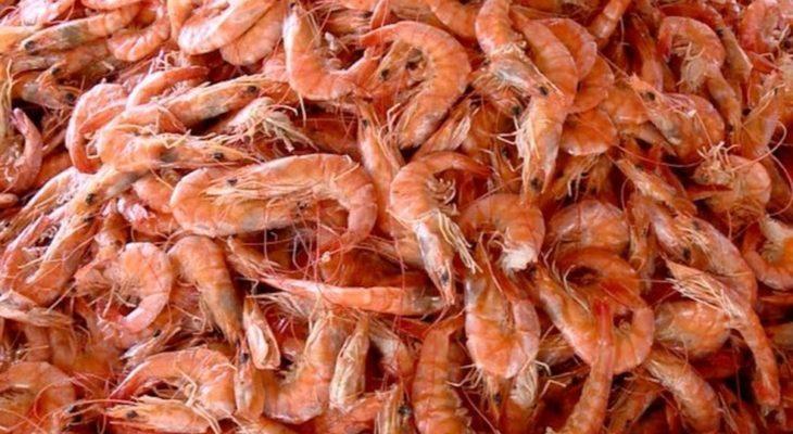 Dezembro inicia defeso de camarão e lagostas no ES