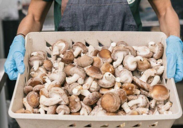Cogumelos-shiitake-2-Faz-Musashi-e1614872837493
