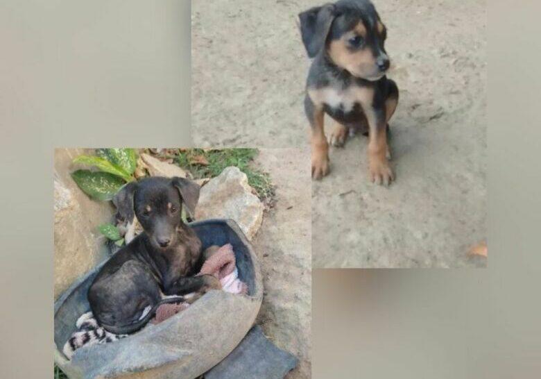 adocao-pets-protetores3-2021-08-28