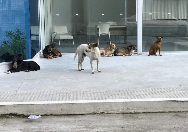 cães_abandonados