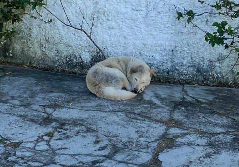 cachorro-abandonado-2021-07-13 (1)