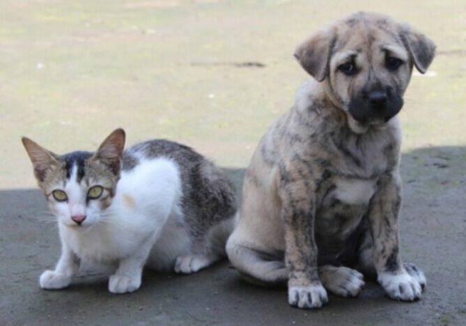 cão e gatp