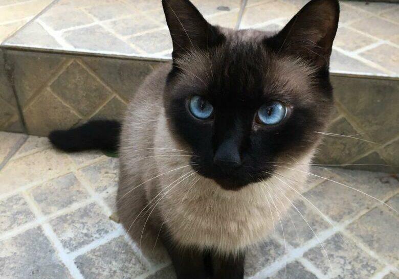 gato theo1