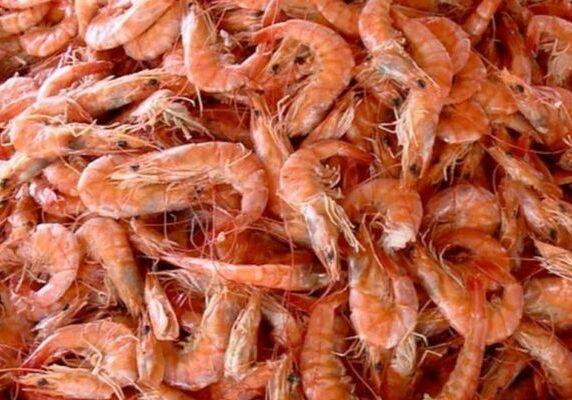pesca-camarao-proibida-nordeste-oleo-mar-litoral-governo-defeso-730x400